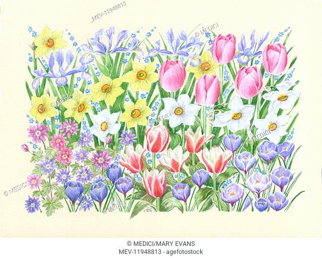 Crocuses, Pink Tulips, Narcissi, Irises and Forget-me-nots on a Peach background