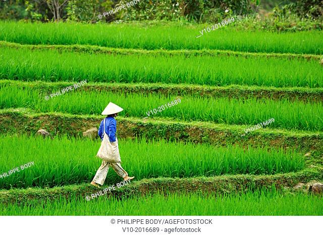 Vietnam, province of Hoa Binh, national Park of Cuc Phuong, Ban Ko Muong, White Thai ethnic group woman