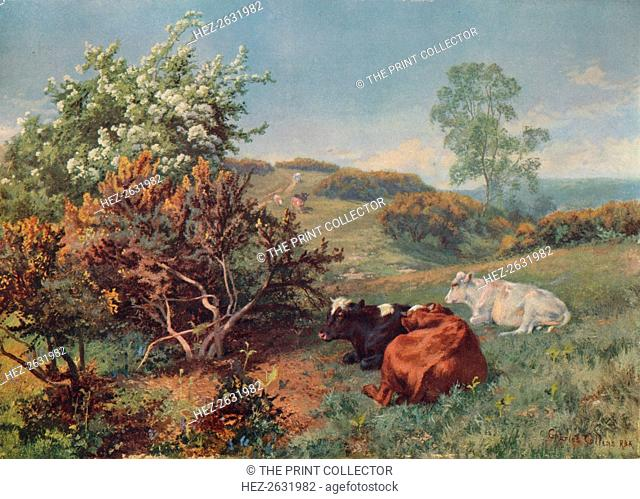 'Landscape with Cattle (In the Nower, Dorking)', c1899. Artist: Charles Collins