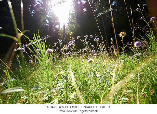 Landscape of a meadow a flower-meadow in late summer