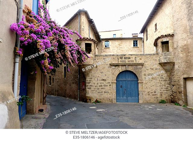 A huge wisteria hangs over the terrace of a house in the 15th century town of Pezenas, France