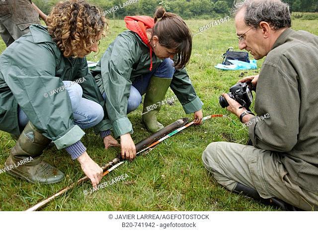 Measuring depth of peat sample, climate change research, Neiker-Tecnalia, Unit of Environment, Belate, Navarra, Spain