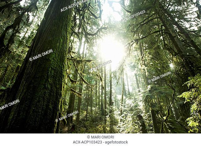 Sun shines through the mist in the rainforest