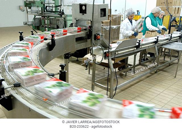 Frozen food industry, broccoli packing line. Navarre. Spain