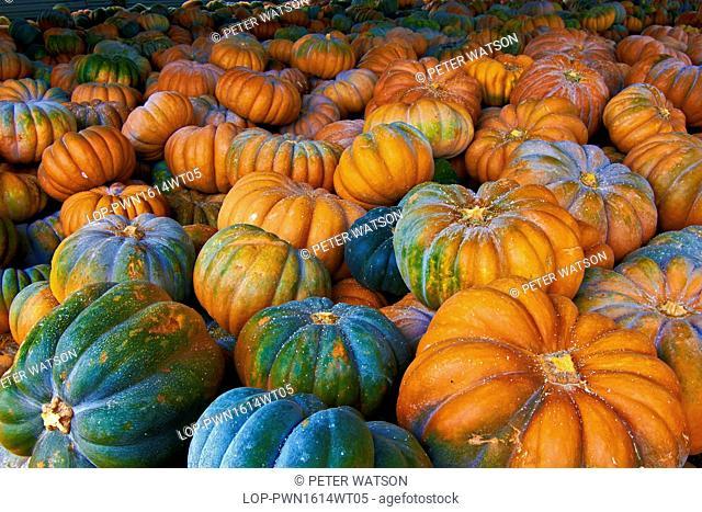 Portugal, Estremadura, Sintra. A farm warehouse full of recently harvested pumpkins