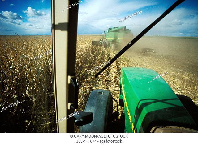 Combine harvesting corn, seen from inside tractor cab. Nebraska. USA