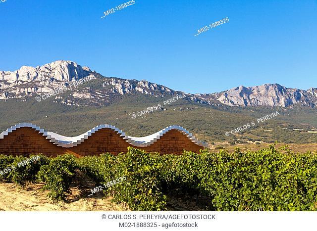 Bodegas Ysios wine cellar, built by Santiago Calatrava, Laguardia, Alava, Spain, Europe