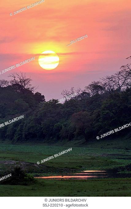 Kaziranga National Park, India at sunset