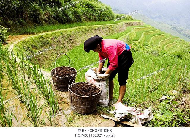 Side profile of a mature woman working in a field, Jinkeng Terraced Field, Guangxi Province, China