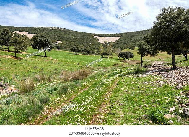 Dirt road in Toledo Mountains, Ciudad Real Province, Spain
