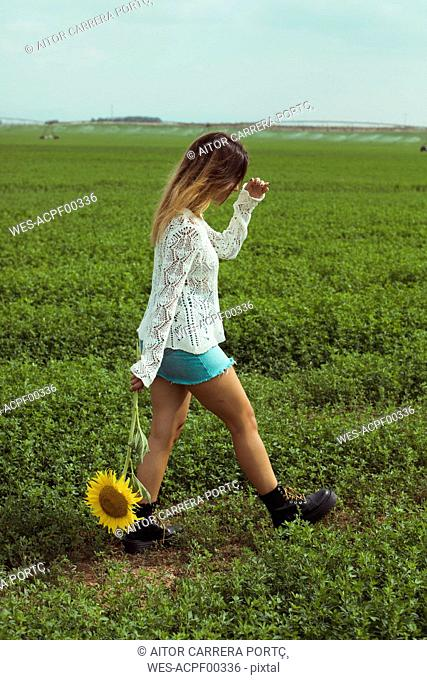 Young woman walking holding a sunflower in a green field