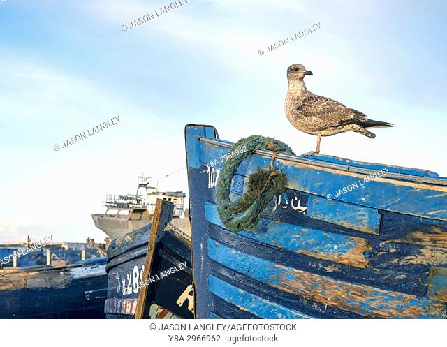 Morocco, Marrakesh-Safi (Marrakesh-Tensift-El Haouz) region, Essaouira. Fishing port at dawn