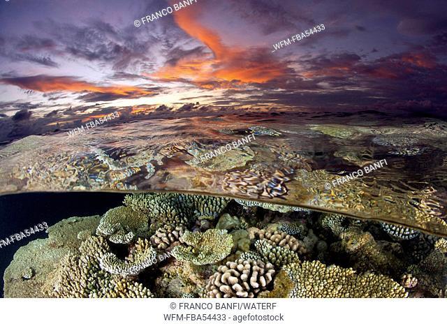 Coral Reef at Sunset, Acropora sp., Ari Atoll, Maldives