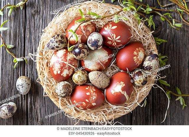 Quail and Easter eggs dyed with onion peels in a wicker basket with fresh willow branches, top view