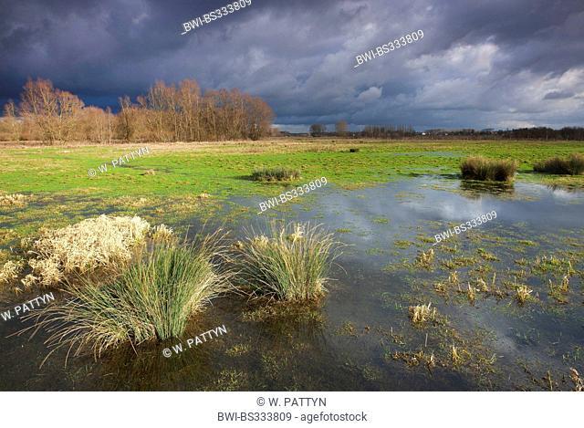 rain clouds over Reytmeersen nature reserve, Belgium, Scheldevallei