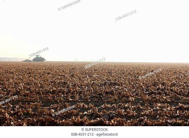 USA, California, Kern County, Plough in cotton field