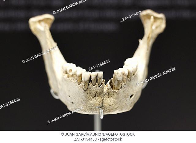 Malaga, Spain - Sept 21th, 2018: Neanderthal mandible of, Zafarraya Cave at Malaga Museum, Spain