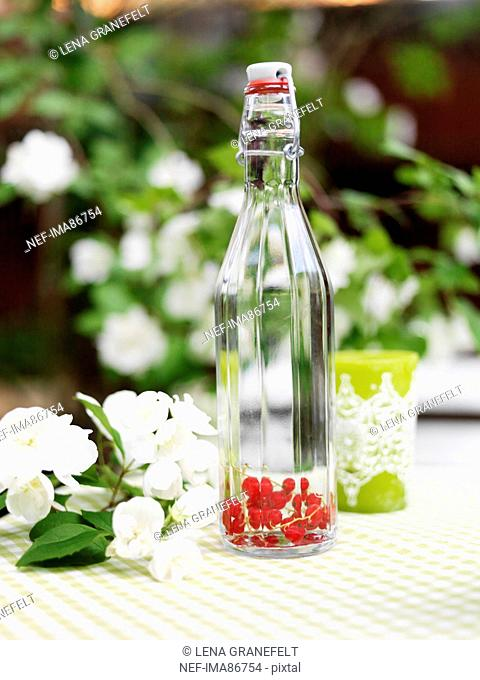 Red currants and water in bottle on outdoor table