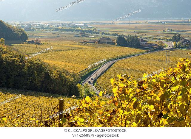Italy, Trentino Alto Adige, vineyards in autumn on Adige valley
