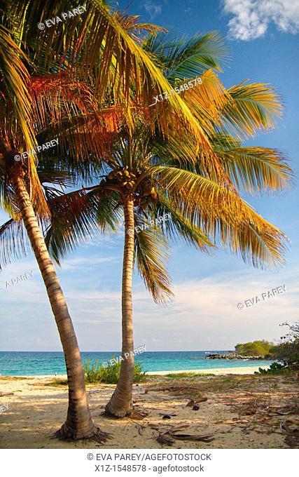 Paradisiacal beach in the island of Vieques in Puerto Rico