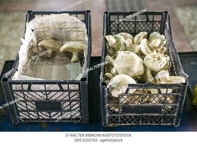 Armenia, Yerevan, G. U. M. Market, food market hall, mushrooms