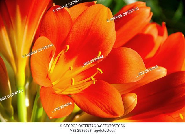 Flower in conservatory, Bushs Pasture Park, Salem, Oregon
