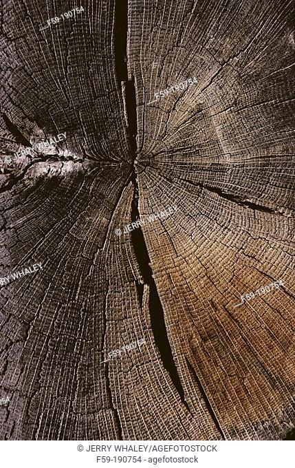 Cracked, Weathered Hardwood Log