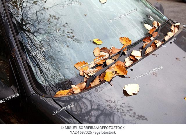 Autumn Leaves on Car Windscreen