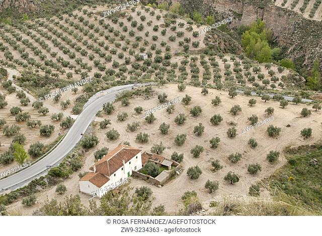 Agricultural landscape with olive grove, traditional farm and a small fluvial canyon near Gorafe, province of Granada, Andalucia, Spain