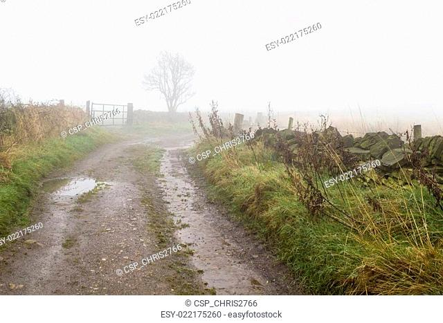 Thick fog on a country lane