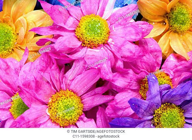 bright coloured flowers close up detail colour bright graphic natural macro close up detail blooming orange pink purple