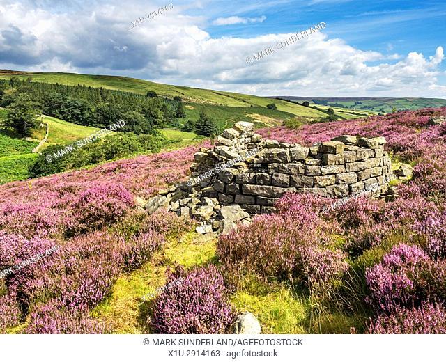 Ruins of a Beehive Condenserat Prosperous Lead Smelting Mill near Pateley Bridge Nidderdale AONB Yorkshire England