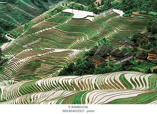 Longji Terraces in the Yao minority village, Longsheng County, Guilin City, Guangxi Zhuang Nationality Autonomous Region of People's Republic of China