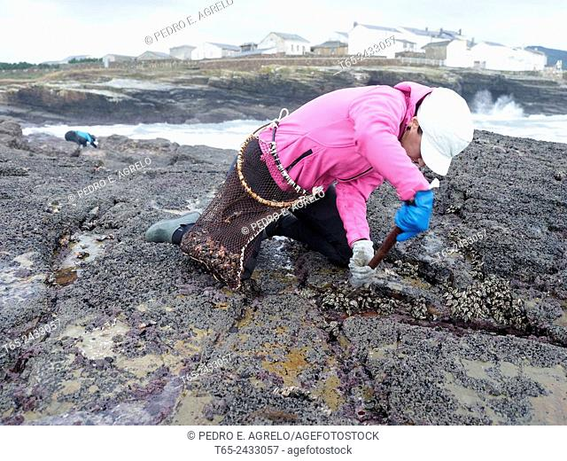 04-12-2014 (Rinlo, Ribadeo, Lugo province, Galicia, Spain): 'percebeiros' (barnacle fishers)