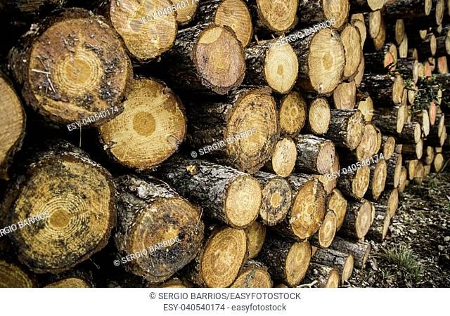 Cut timber trunks, detail of ecological disaster