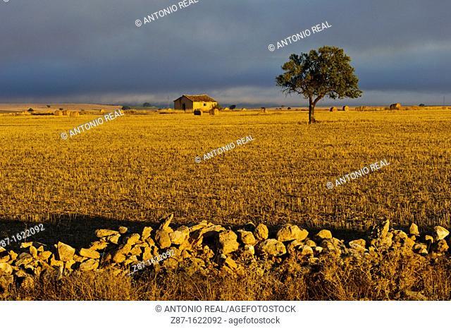 Country landscape, Almansa, Albacete province, Castilla-La Mancha, Spain