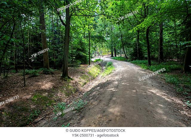 Mastbos, Breda, Netherlands. Trackway inside a forest, filled with deciduous trees