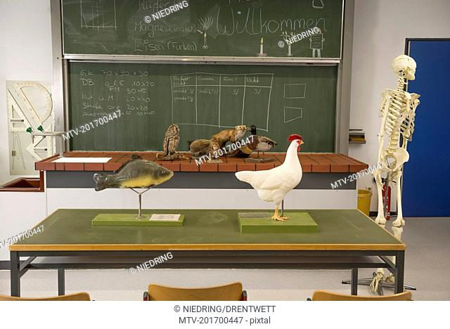 Stuffed animals and human skeleton for experiments in a biology class, Fürstenfeldbruck, Bavaria, Germany