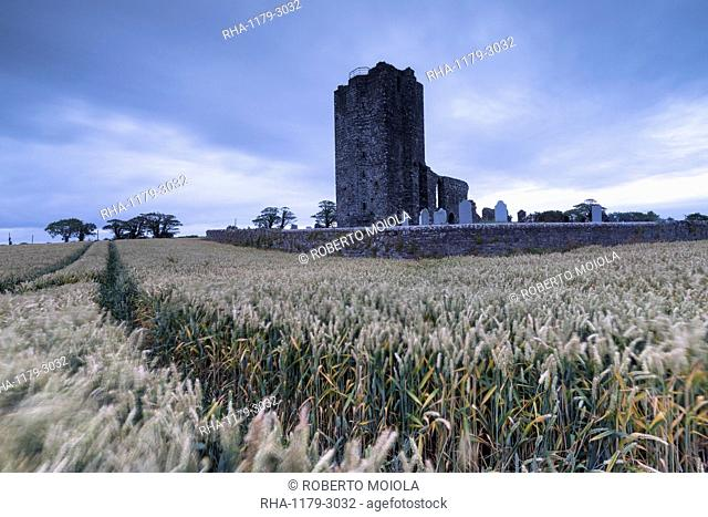 Fields of wheat ears around Baldongan Castle and Church, Skerries, County Dublin, Republic of Ireland, Europe