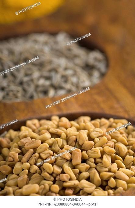 Close-up of fenugreek seeds in a spice container