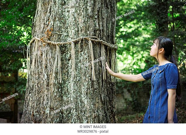 Young woman wearing blue dress touching shimenawa ropes on tree at Shinto Sakurai Shrine, Fukuoka, Japan