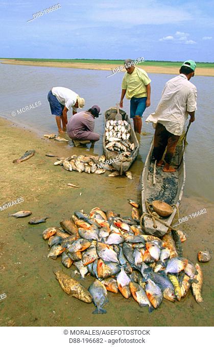 Piranhas. Venezuela