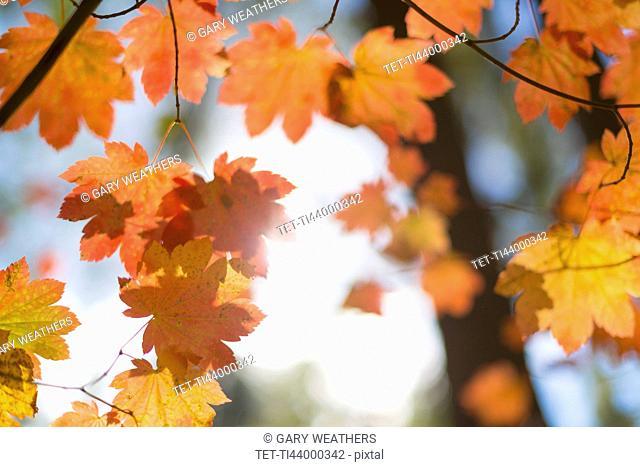 Close-up of orange colored leaves on tree
