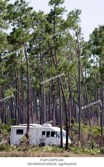 A camper rests amidst a forest of long pine trees at Long Pine Key. Long Pine Key lies near the eastern edge of the Everglades National Park and is accessed...