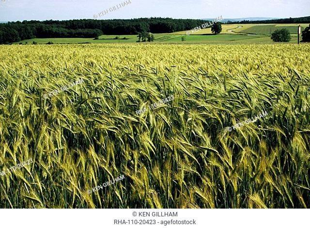 Grain field, agricultural landscape, near Retz, Lower Austria, Austria, Europe