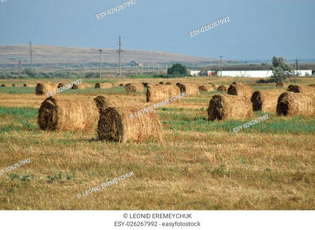 The Haystacks in the field. Summer haymaking