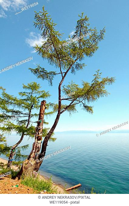 Tree of desires, settlement Listvyanka, Lake Baikal, Irkutsk region, Siberia, Russian Federation
