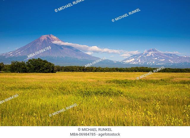 Wild flower field before the Avachinskaya Sopka volcano near Petropavlovsk-Kamchatsky, Kamchatka, Russia