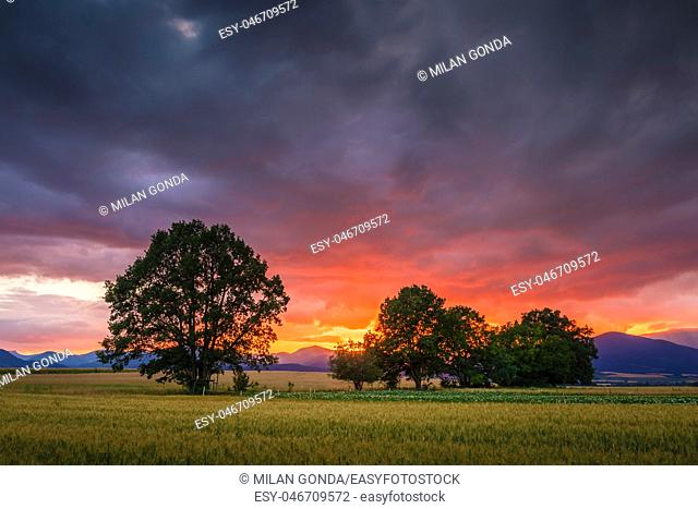 Rural landscape with fields, trees and distant mountains in Turiec region, central Slovakia.