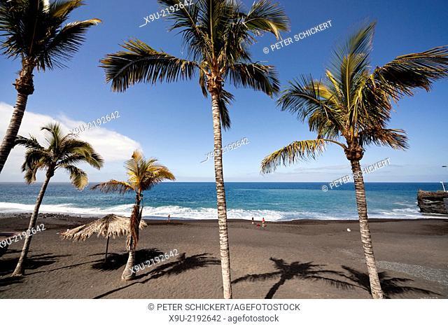 coconut trees on the black beach in Puerto Naos, La Palma, Canary Islands, Spain, Europe